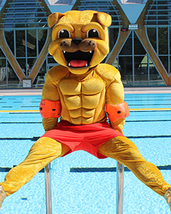 Orléans Loiret Basket - OLB SHOP